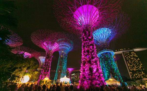 attractions-treelight
