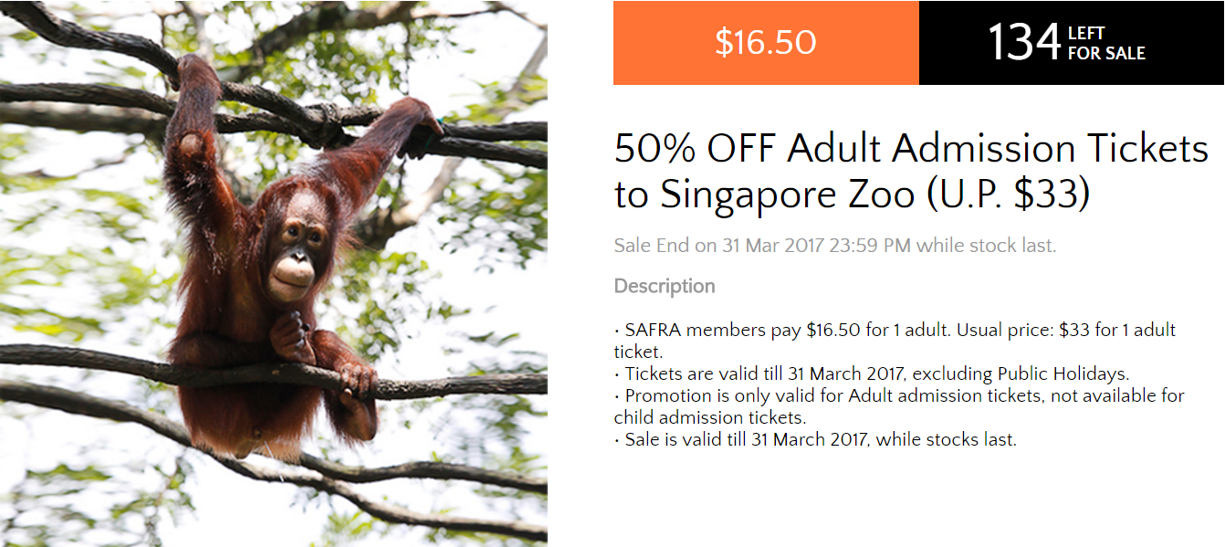 singapore zoo 2