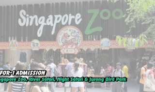 Singapore zoo 1 for 1