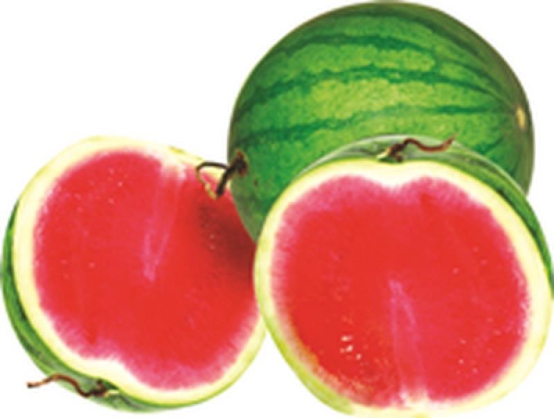 MALAYSIA Red Seedless Watermelon