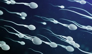 sperm health