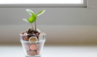 green plant in a pot of coins